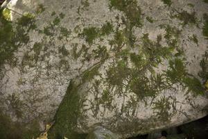 Botanikos sodas 2224