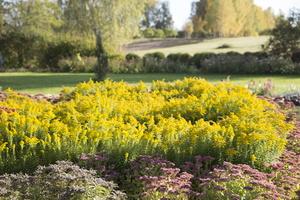 Botanikos sodas 2227