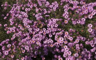 Botanikos sodas 2243