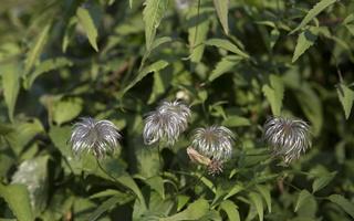 Botanikos sodas 2246