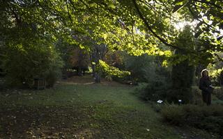 Botanikos sodas 2248