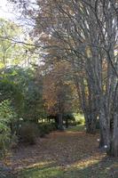 Botanikos sodas 2249