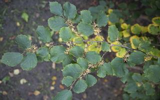 Botanikos sodas 2252