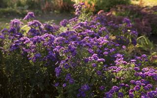 Botanikos sodas 2261