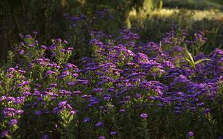 Botanikos sodas 2262