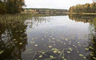 Molėtai · Želvos ežeras, ruduo 2299