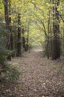 Molėtai · miškas prie Želvos ežero, ruduo 2303