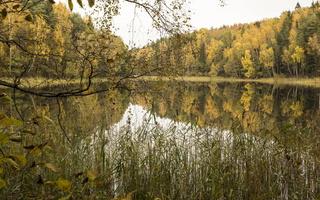 Molėtai · Želvos ežeras, miškas, ruduo 2304