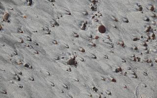 Juodkrantė · smėlis 2734