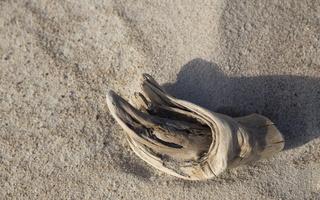 Juodkrantė · smėlis 2847