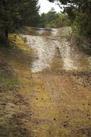 Juodkrantė · miško takelis 2963
