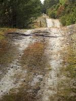 Juodkrantė · miško takelis 2964