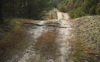 Juodkrantė · miško takelis 2965