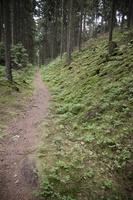 Juodkrantė · miško takelis 3228