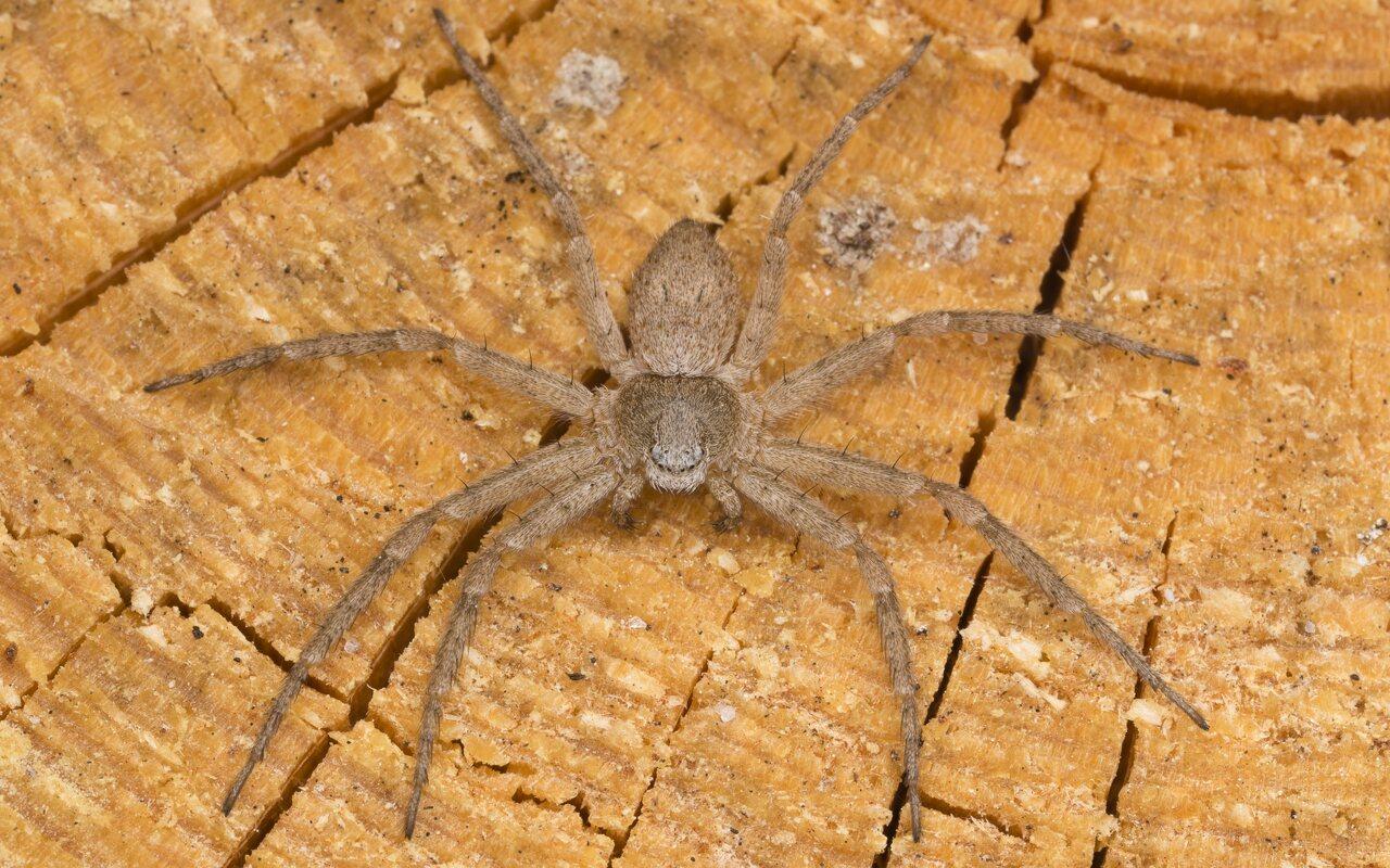 Araneae-3241.jpg