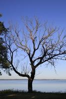 Juodkrantė · marios, nudžiūvęs medis 3280