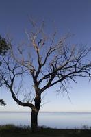 Juodkrantė · marios, nudžiūvęs medis 3281