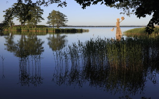 """Zigmunds Vilnis (Latvija) """"Neringa"""" 3284"""