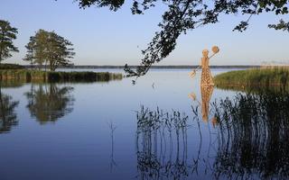 """Zigmunds Vilnis (Latvija) """"Neringa"""" 3285"""