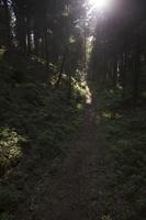Juodkrantė · miško takelis 3314