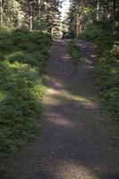Juodkrantė · miško takelis 3316