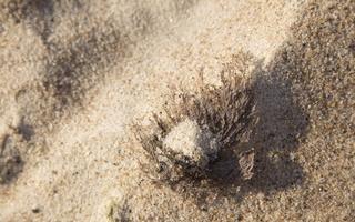 Juodkrantė · smėlis 3333