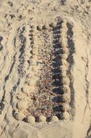 Juodkrantė · smėlis 3503