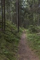 Juodkrantė · miško takelis 3579