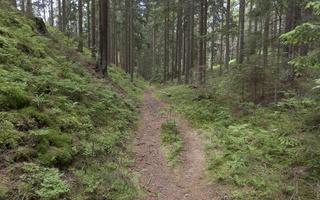 Juodkrantė · miško takelis 3581