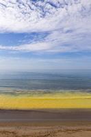 Juodkrantė · geltona jūra, pušų žiedadulkės 0473