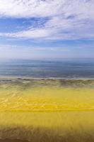 Juodkrantė · geltona jūra, pušų žiedadulkės 0475