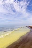 Juodkrantė · geltona jūra, pušų žiedadulkės, debesys 0478