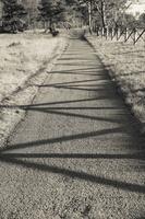 Juodkrantė · šešėliai