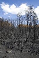 Juodkrantė · gaisravietė 0592