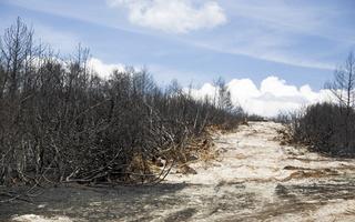 Juodkrantė · gaisravietė 0593