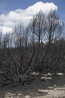 Juodkrantė · gaisravietė 0594