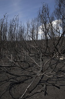 Juodkrantė · gaisravietė 0595
