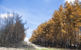 Juodkrantė · gaisravietė 0596