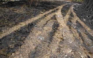 Juodkrantė · gaisravietė 0606
