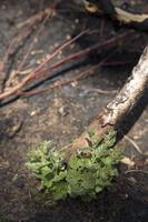 Juodkrantė · gaisravietė 0607