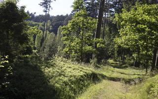 Juodkrantė · sengirė 1208