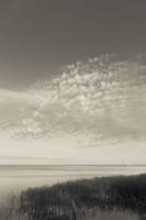 Juodkrantė · marios, nendrės, debesys 1436