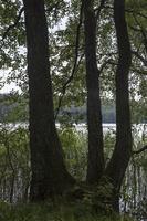 Spindžiaus ežeras 3920