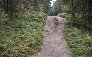 Juodkrantė · takelis miške 4112