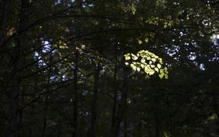 Botanikos sodas 4155