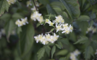 Botanikos sodas 4169