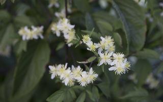 Botanikos sodas 4170