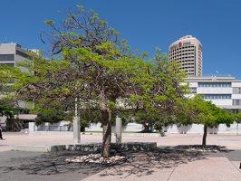 Tel Aviv Museum of Art P1020475