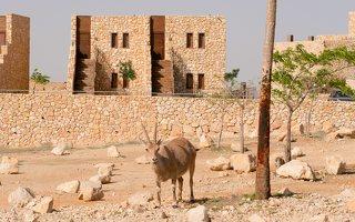 Capra ibex nubiana P1020549