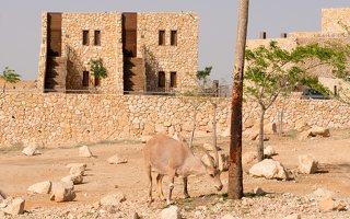 Capra ibex nubiana P1020550